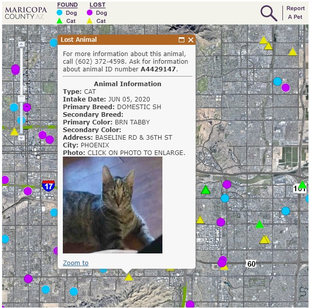 interactive lost pet map